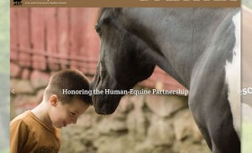 Websites | Dorset Equine Rescue